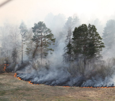 Прогноз пожарной опасности на 1-3-е суток с фактическими показателями горимости по территории республики, области, районов